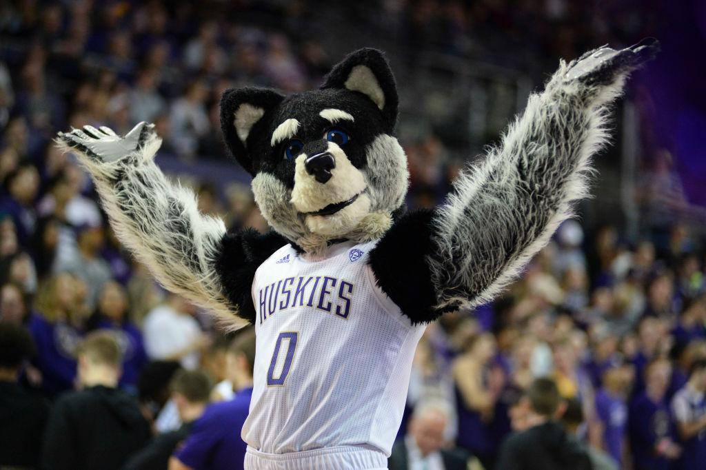 UW mascot Harry the Husky entertaining fans and future Washington sports bettors