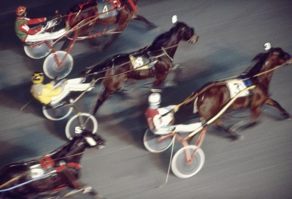 Harness Racing Horses